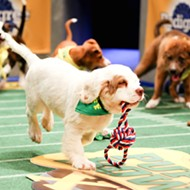 Hammered Lamb hosts Puppy Bowl stars at their watch party