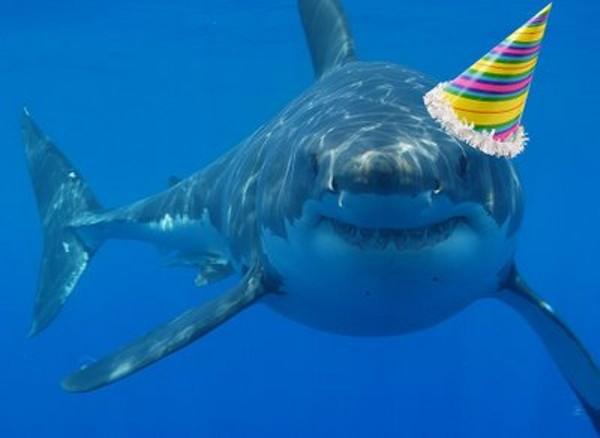 tumblr_static_happy_birthday_sharkjpg