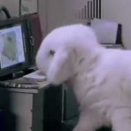 Happy Friday. Please enjoy this video of an office run by bunnies.
