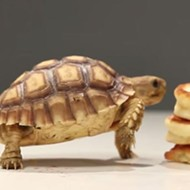 Happy Memorial Day! Here are some tiny tortoises devouring a short stack of pancakes.