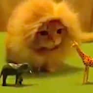 Happy Wednesday. Watch this video of a cat who is clearly King of the Jungle