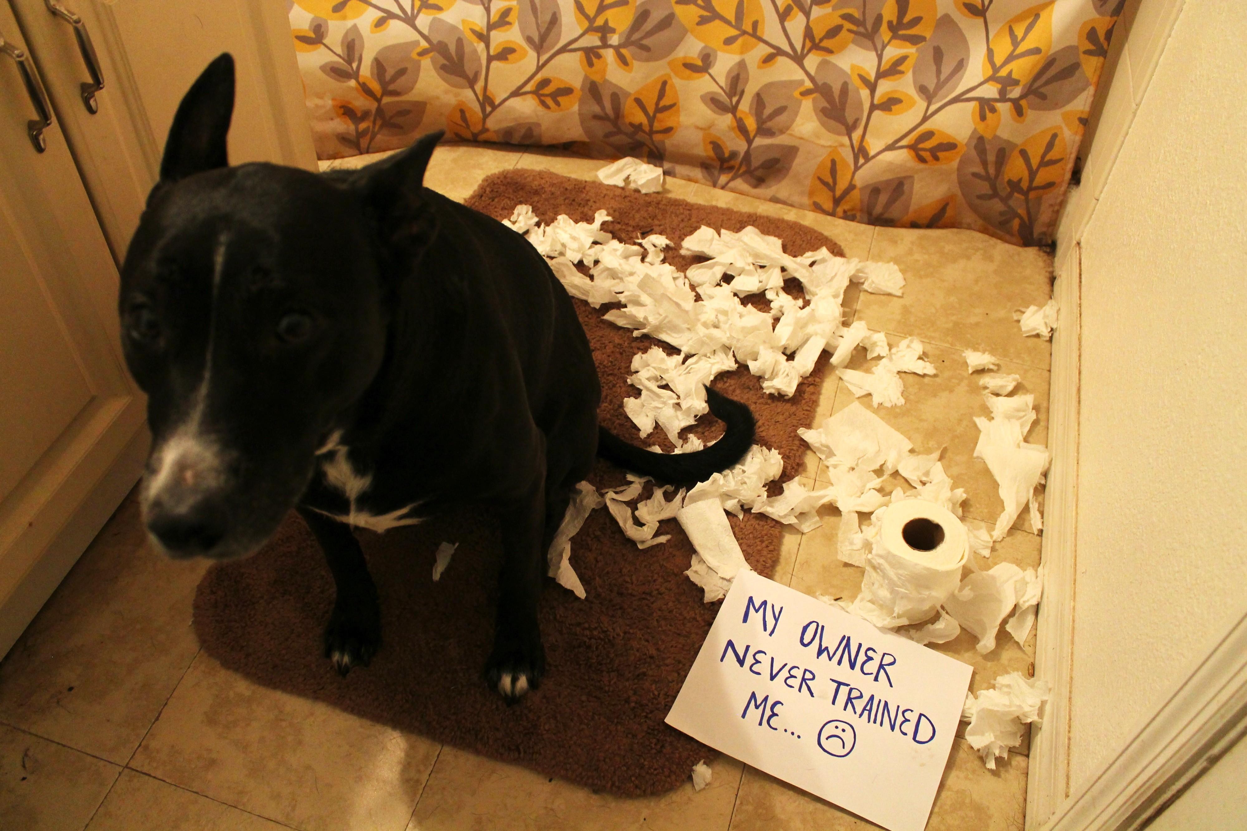 Puppy Love Dog Problems