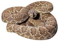 021204_snakejpg