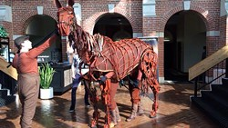 Joey and the War Horse cast arrive at Orlando Bob Carr