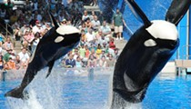 UCF grad and former SeaWorld intern takes issue with CNN's airing of documentary 'Blackfish'