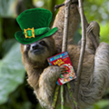 Lucky you: 20 awesome ways to celebrate St. Patrick's Day in Orlando in 2015