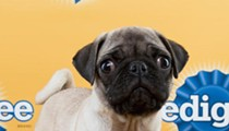 Meet the Florida Little Dog Rescue puppies who'll be going to the Puppy Bowl!