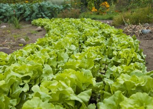 09-30-eola-garden-meetingjpg
