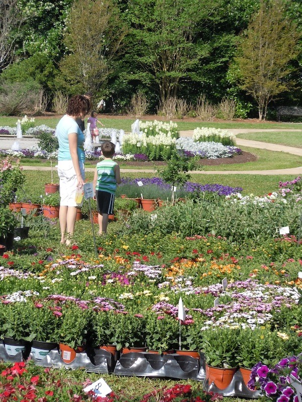 more than 50 florida based growers featured at leu gardens 39 annual plant sale blogs
