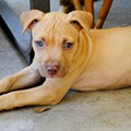 Orange County Animal Services hosts Barktoberfest pet-rescue event