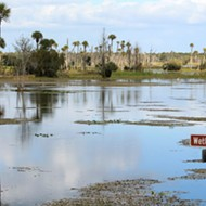 Orlando Wetlands Park: Underneath the scenic vistas lies a water-cleansing powerhouse