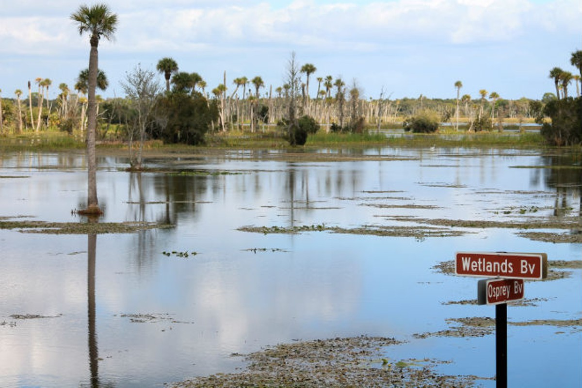 orlando-wetlands-21.jpg