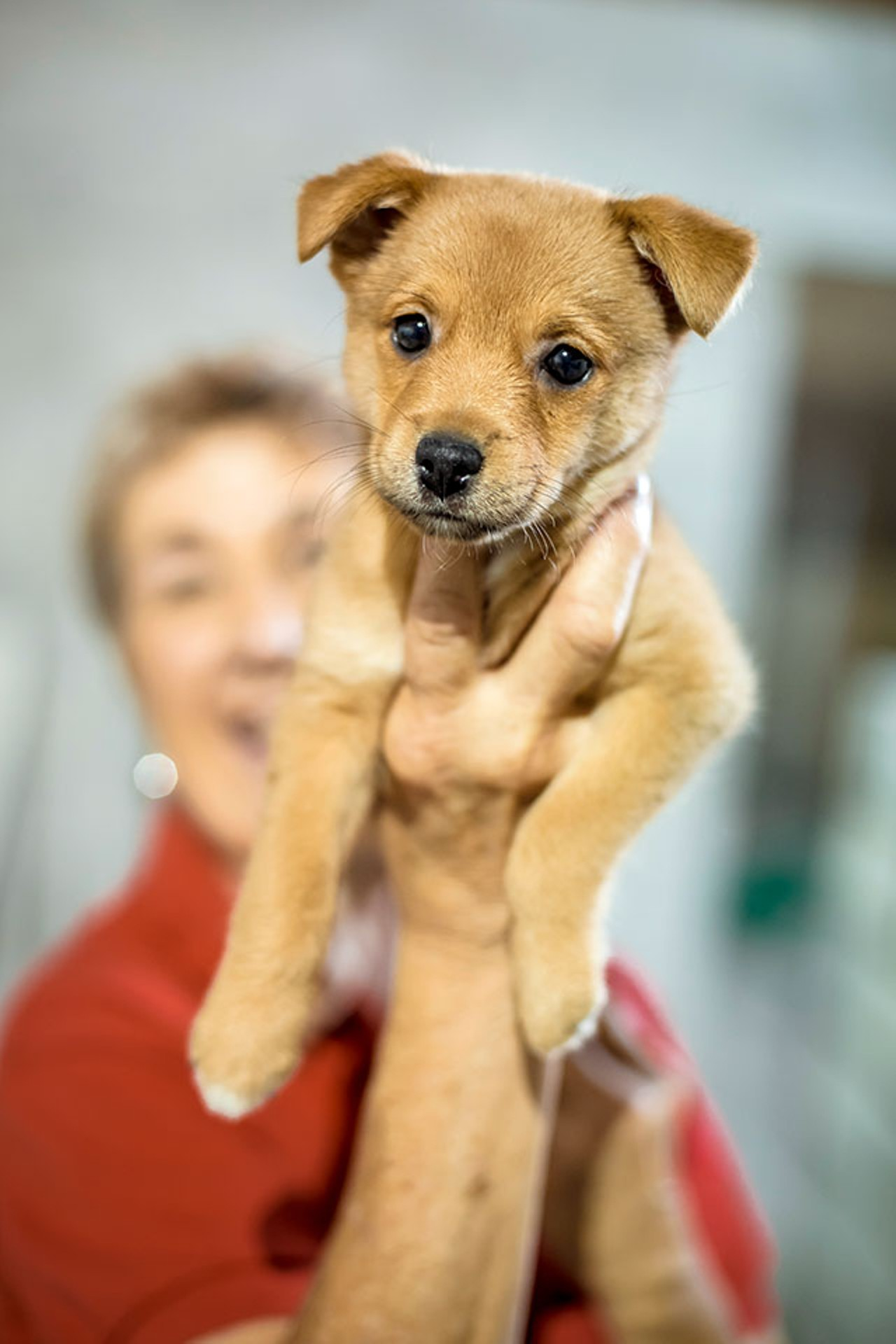 Pet Rescue by Judy erects new million dollar animal shelter in