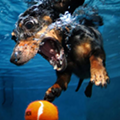 Thank you, Internet: 'Underwater Puppies' and 'Star Wars' in three minutes