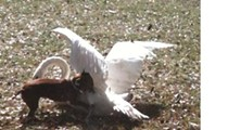 Police Beat: Dog bites swan at Lake Eola