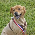 Pooches compete in the doggie dash, musical chairs and more at Doglympics