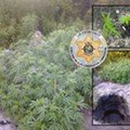 Pot plot discovered in Sumter County Wildlife Management Area