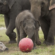 Ringling Bros. Barnum & Bailey Circus to retire its elephants