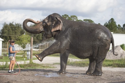 RINGLING CENTER FOR ELEPHANT CONSERVATION