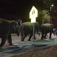 Video: Disney's Dumbo Departs as Ringling Elephants Arrive
