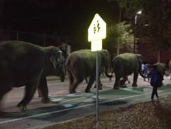 Ringling elephants on parade in Orlando's Paramore neighborhood.
