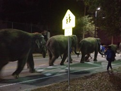 Ringling elephants on parade in Orlando's Paramore neighborhood.