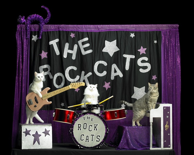 PHOTO OF BEST BAND EVER COURTESY AMAZING ACRO-CATS