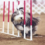 Selection Reminder: AKC/Eukanuba National Championship