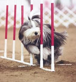 12-15-sel-dog-credit-american-kennel-club2jpg