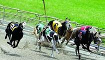 Senate passes bill requiring dog tracks to report injuries to racing greyhounds