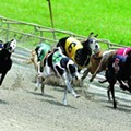 Senate passes bill requiring dog tracks to report injuries to racing greyhounds