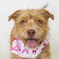 Showcasing adoptable pets and revisiting Billy Manes' riveting story