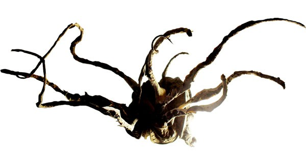 Shriveled Bits: A nautiloid is one of the creatures Rhodehamel created from dried pieces of organic detritus