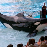 SeaWorld's search for new CEO narrowed down to three people who haven't seen 'Blackfish'