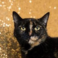 Gimme Shelter: Meet Cookie!