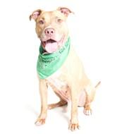 Gimme shelter: Meet Bruno!