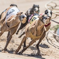 Judge blocks proposed ban on greyhound racing from Florida ballot