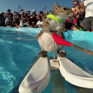 You have one last chance to see Orlando's waterskiing squirrel, Twiggy, before she  retires