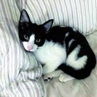 Gimme Shelter: Meet Kevin!