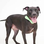 Gimme Shelter: Meet Duke!