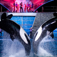 SeaWorld announces new lineup of Summer Nights festivities