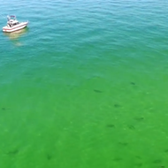 Drone footage shows hundreds of loitering sharks off the coast of Florida