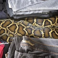 Is that a python in your pants?