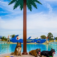 Bring your dog to Legoland on Nov. 8
