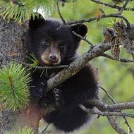 Bear-hunt protests scheduled in cities around Florida on Friday
