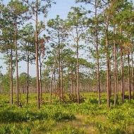 Disney to preserve 3,000 acres of wetlands so they can destroy wetlands closer to park