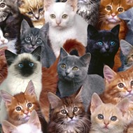 A woman in Melbourne was somehow living with 100 cats