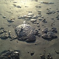 'Pancake-sized' globs of tar are mysteriously washing up on Cocoa Beach