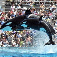 SeaWorld San Diego plans to end controversial killer whale show