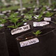 Florida approves Winter Garden nursery to grow medical marijuana